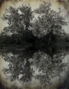 face arbre